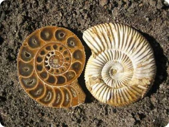 Image result for fossils in rocks