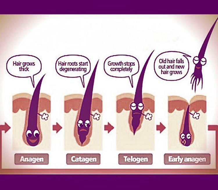 Electrolysis Cycles