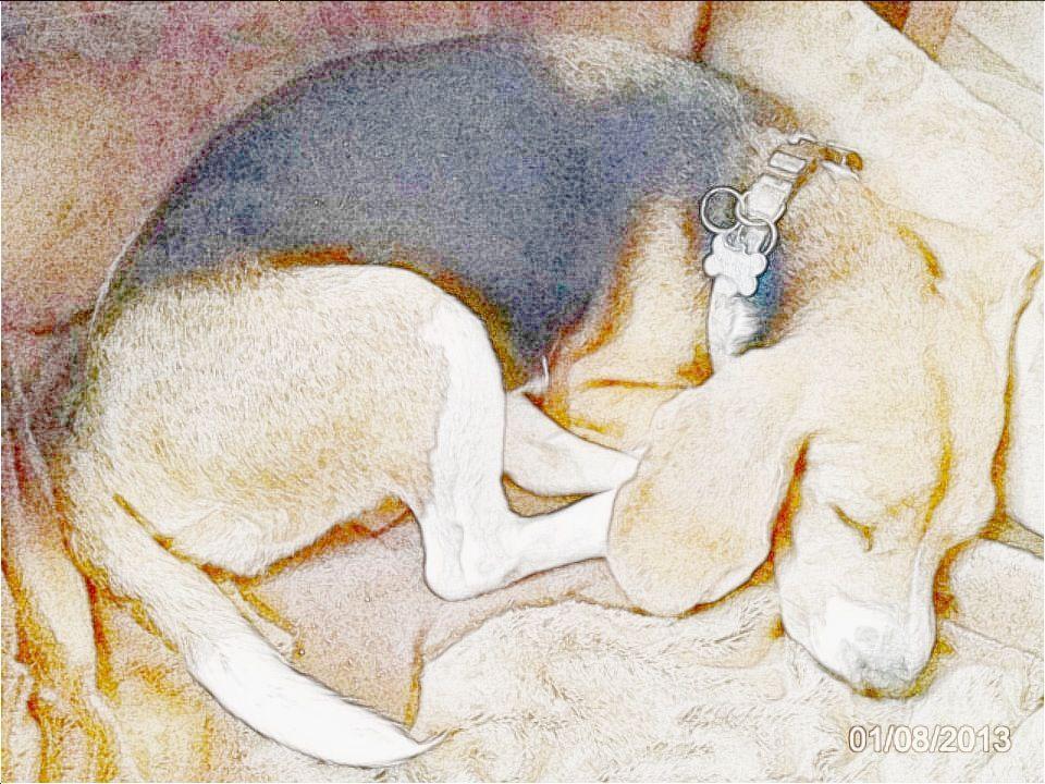 Schön beagle :)