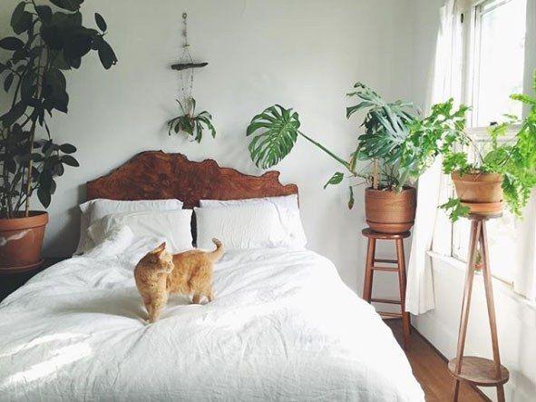 Quelle plante avoir dans la chambre bedroom plante chambre deco plantes interieur - Plante dans la chambre ...
