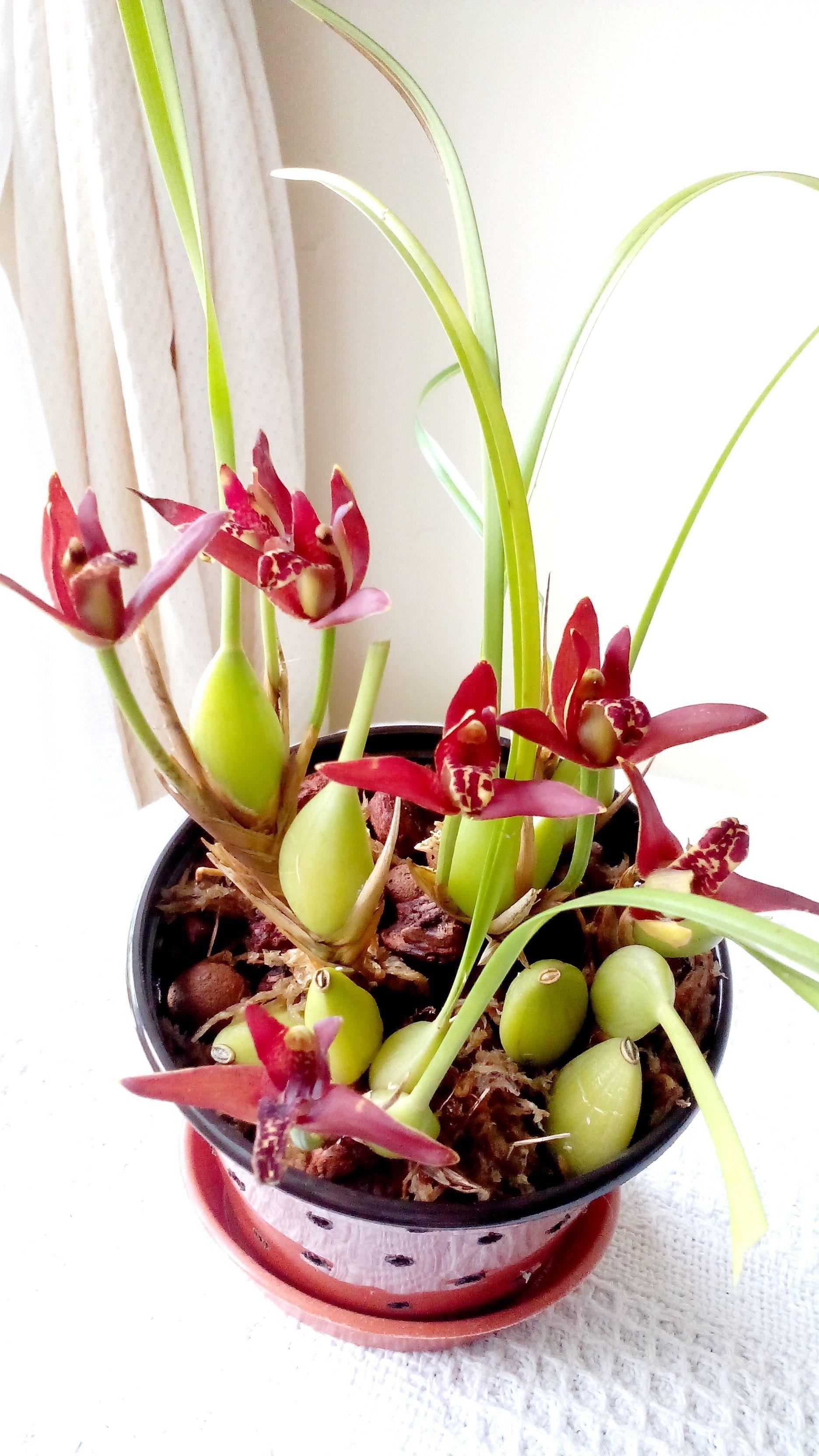 Orchidee Meravigliose Trucchi E Segreti le migliori 261 immagini su piante orchidee luis nel 2020
