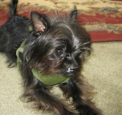 My favorite dog ever,Houston,who has a cleft palate. He is still beautiful to me. 11 months old on August 16,2012.