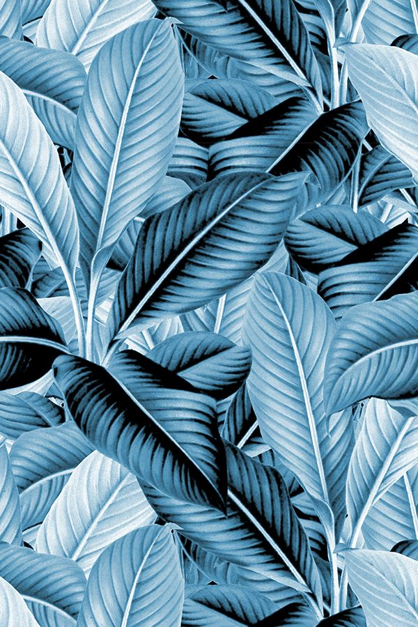 Colorful Fabrics Digitally Printed By Spoonflower Palm In Palm Profusion Blue And White Textile Pattern Design Blue And White Background Patterns Free for commercial use no attribution required high quality images. pinterest