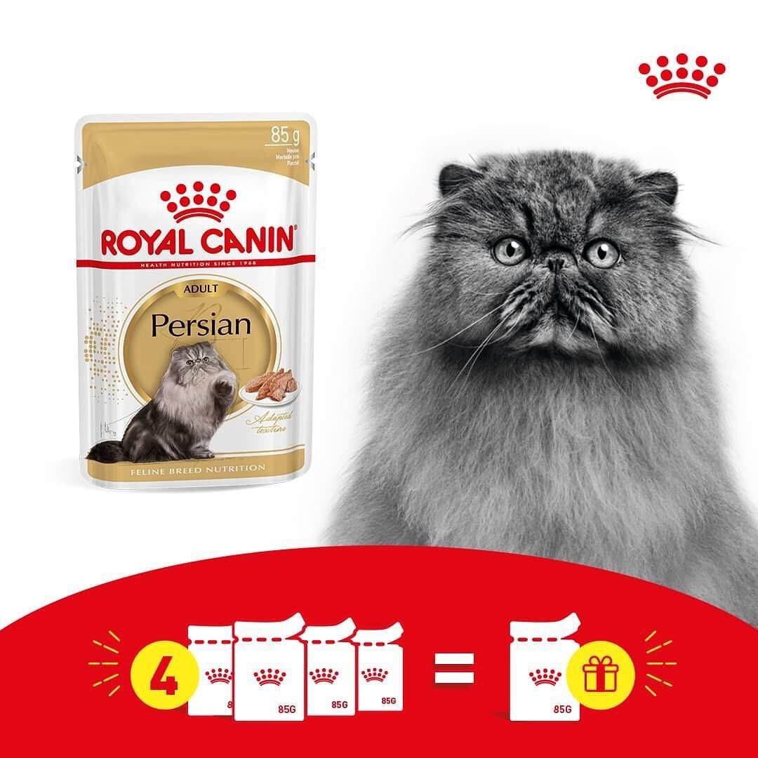 Health Nutrition Also Exists In Wet The Offer Is Still Here Grab 4 Pouches And Get Your Free Pouch Royalcaninegypt R Cat Food Food Animals Persian Kittens
