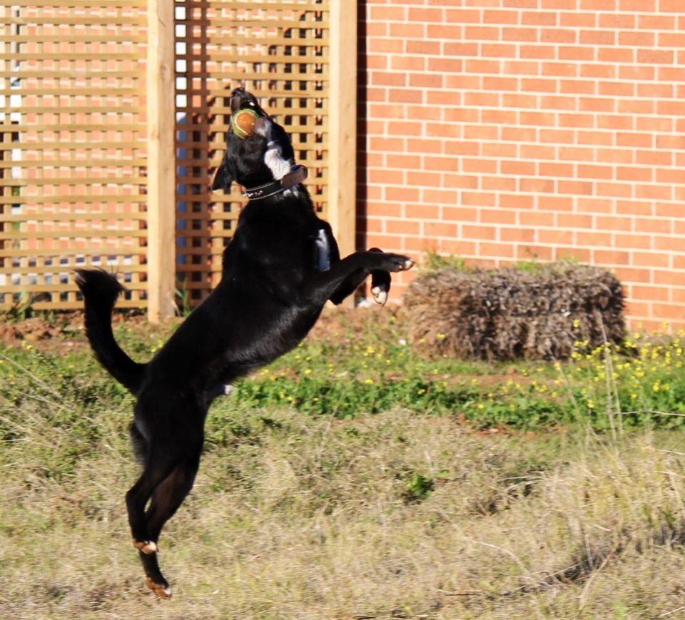 Kel the Wonder Dog!