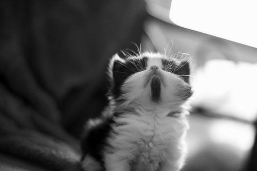 Cute kitten with goatee