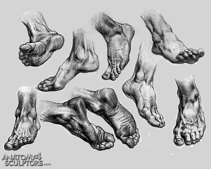 drawing art Feet human Anatomy foot reference tutorial toes ...