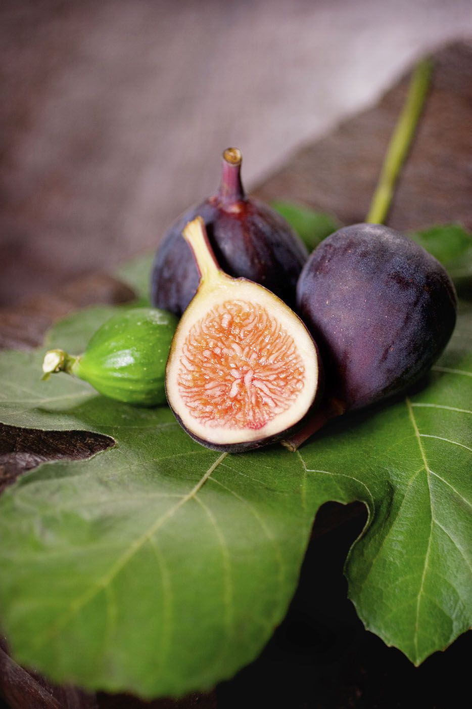 How To Grow Fig Fig Tree At Home Fig Growing Guide Fig Plant Fig Tree In A Container Fig Tree Fruit Trees For Sale Fruit