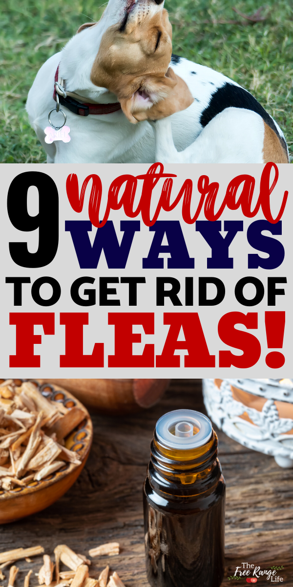 9 Natural Ways to Get Rid of Fleas in Your Home and On