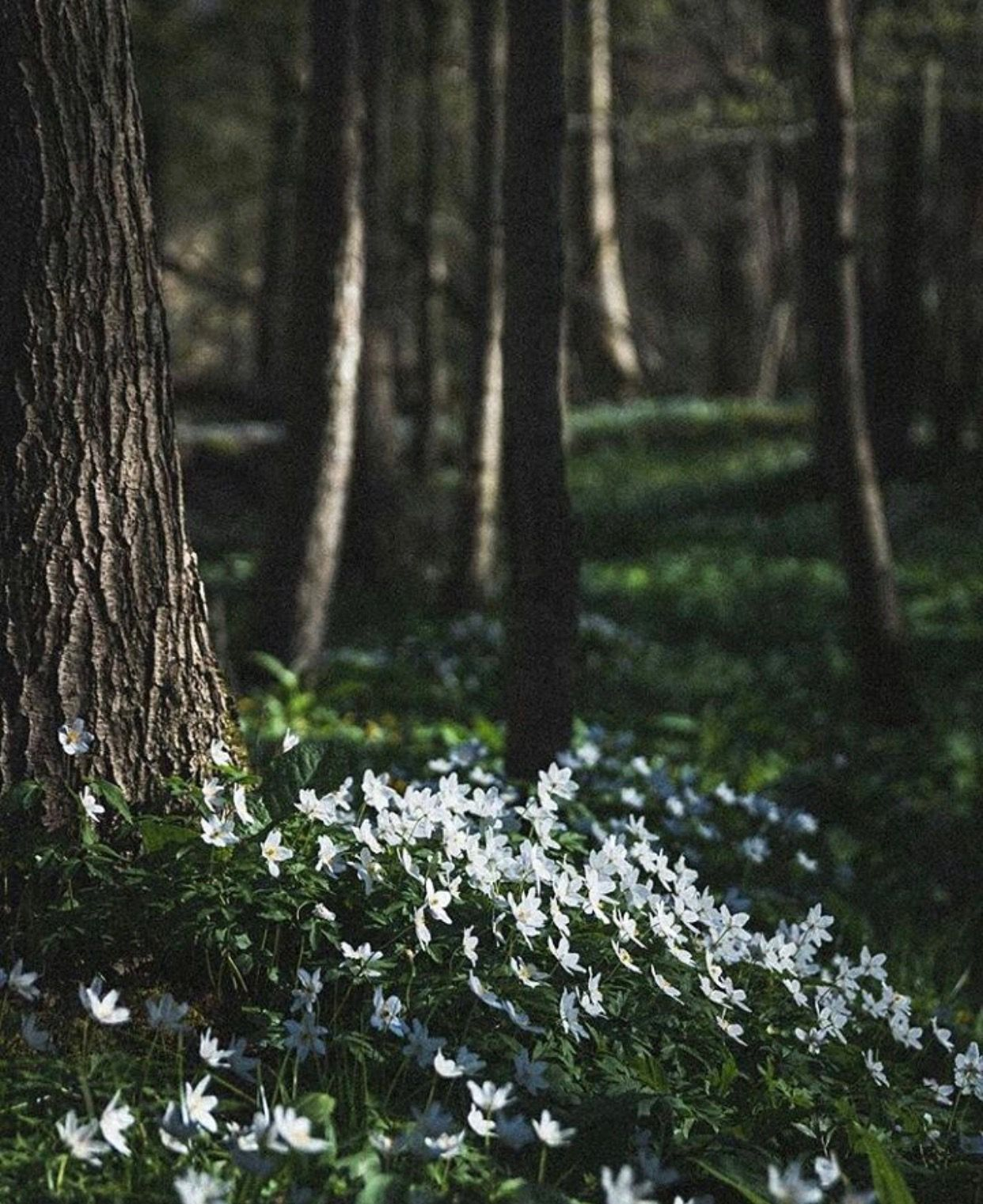 Sŋσⱳ Wꜧιʈɛ's Cσʈʈαɠɛ * ༻ Forest flowers, Nature