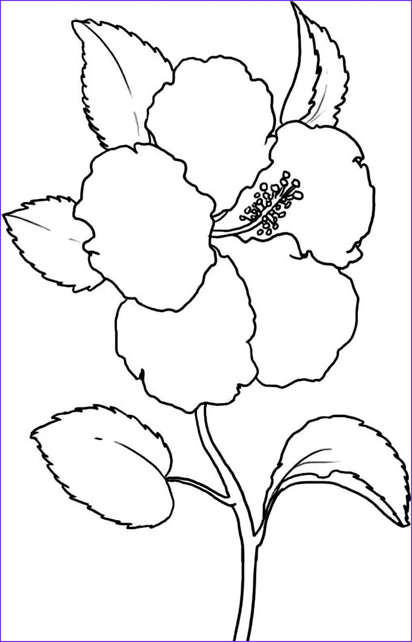 13 Cool Flower Coloring Photography In 2020 Coloring Pages For