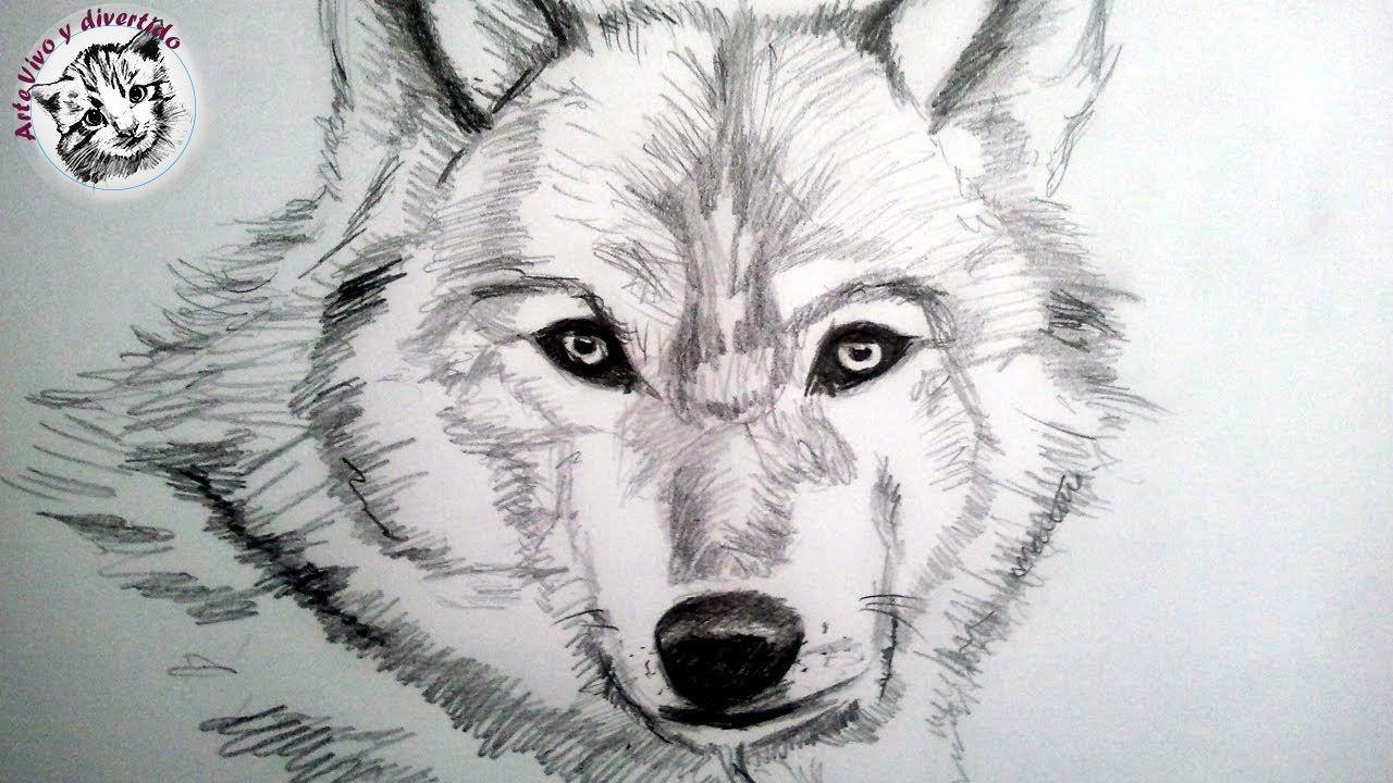 Como Dibujar Un Lobo A Lapiz Paso A Paso Como Dibujar Animales Con Pelo Cómo Dibujar Un Lobo Como Dibujar Animales Aprender A Dibujar Animales