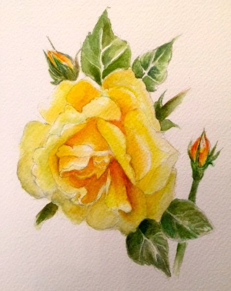 Yellow Rose Watercolor En 2020 Tableau