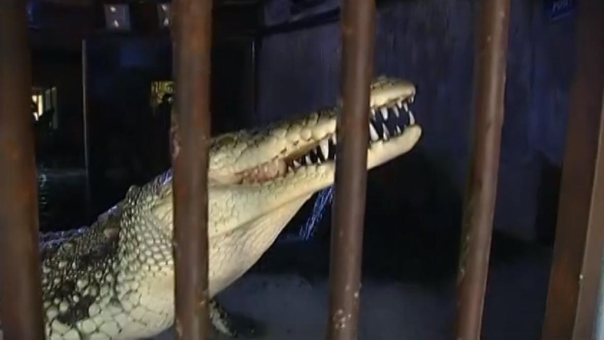 Légende ou fait divers ? Un crocodile se baladerait dans les égouts de la ville. France 2 a enquêté.