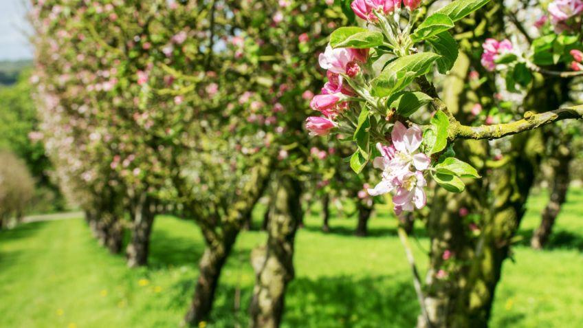 5 rboles frutales para cultivar en jard n o en maceta for Arboles frutales para jardin