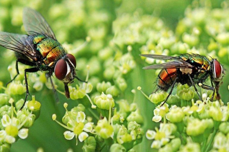 تفسير حلم الحشرات الطائره في المنام مجلة رجيم Flying Insects Animals Insects