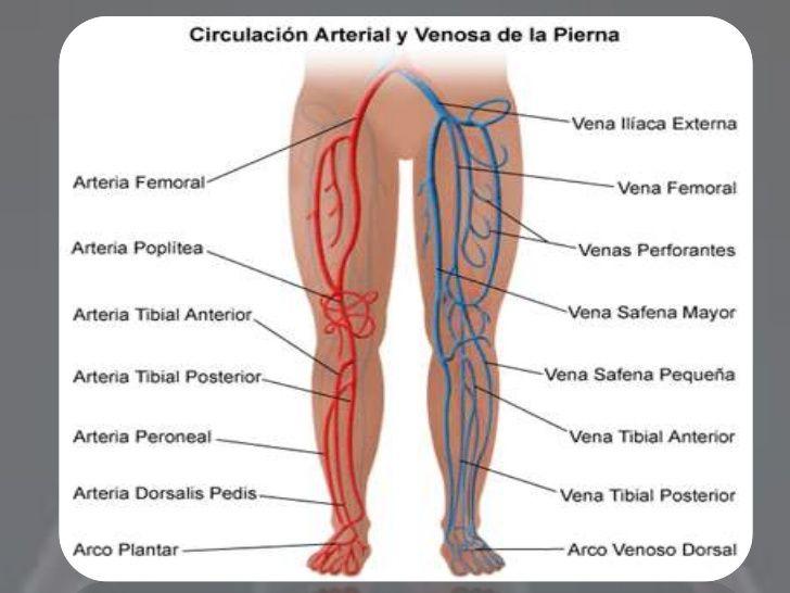 Resultado de imagen de arterias miembro superior y inferior | trauma ...