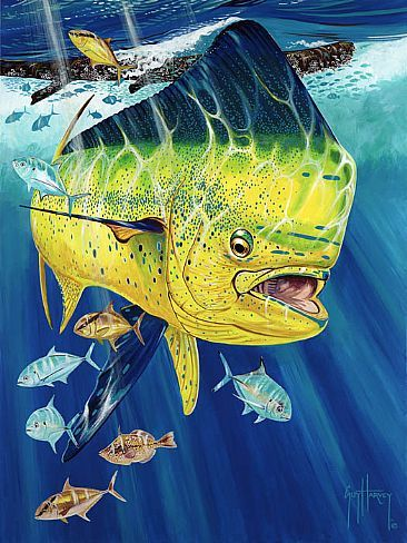 511 Golden Prize 09260802 05 Cc72ppi Jpg 366 488 Guy Harvey Art Fish Art Guy Harvey