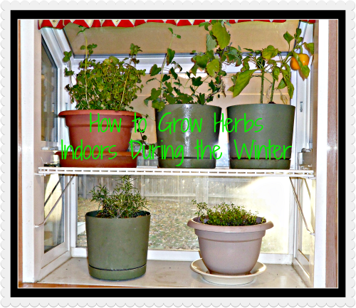 Growing Herbs Indoors For Winter Modern Alternative Health This Is A Great Site With Many