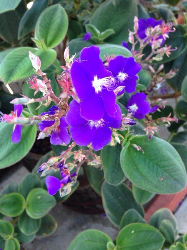 Wildflower Identification By Color Plants Wild Flowers Purple Wildflowers