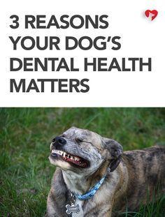 3 Gründe für die Zahngesundheit von Hunden   – Animals