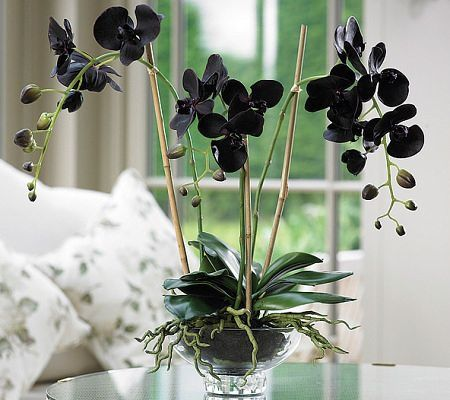 Shop Online Beautiful Orchids Phalaenopsis Orchid Orchid Plants