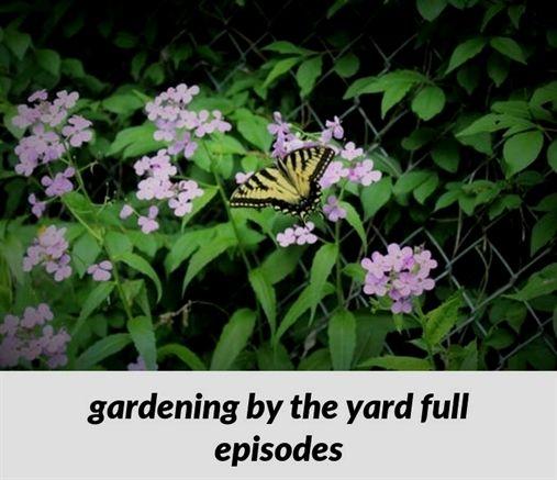 Amazing Advice For A Thriving Organic Garden Garden Gardening