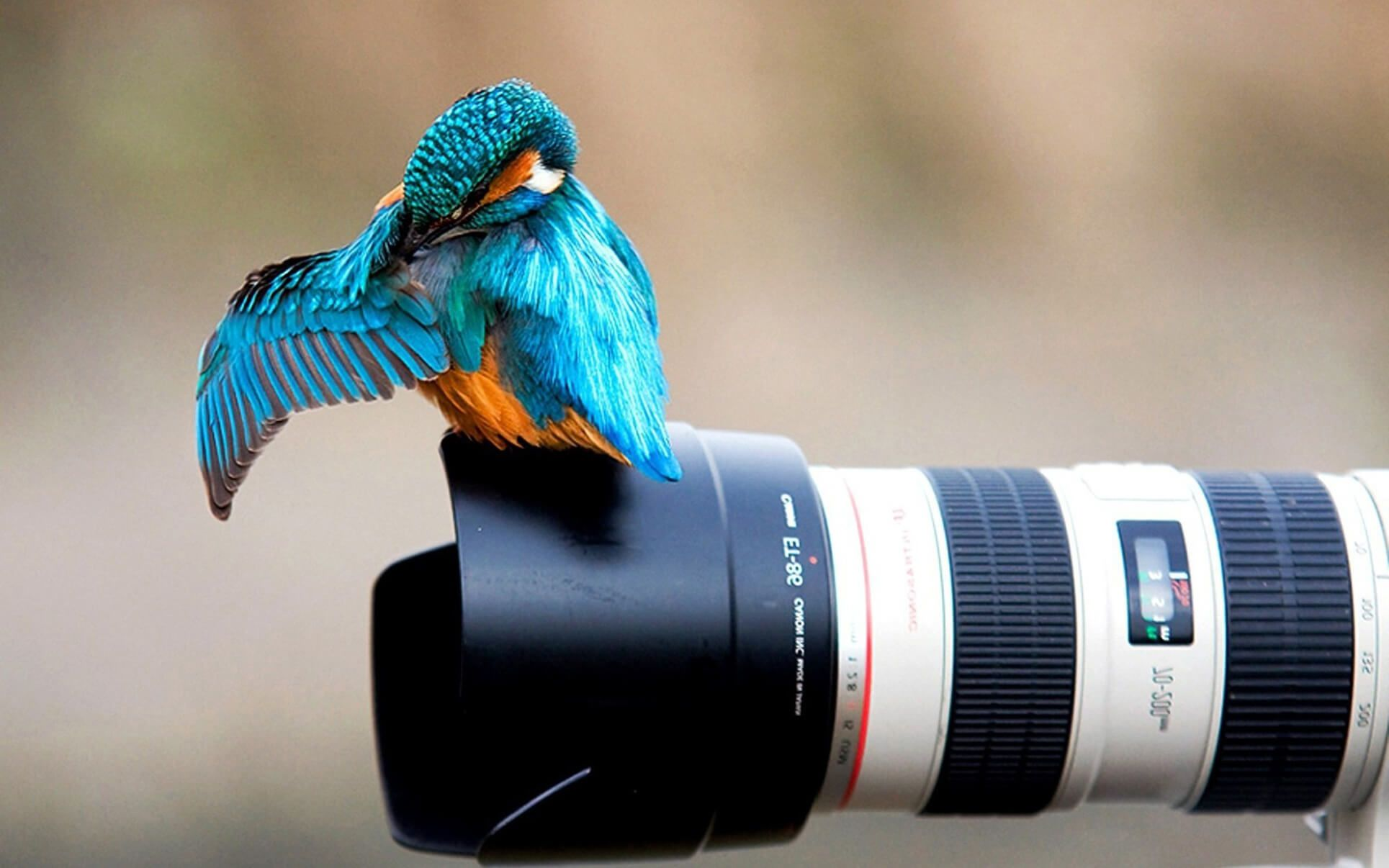 Canon Camera Photography Wallpaper Hd Camera Wallpaper Canon Camera Photography Photography Camera