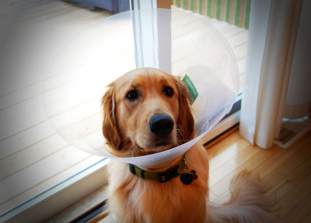 The Real Cost of Pet Insurance Claims Pet insurance