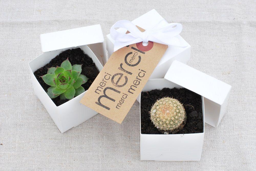 cadeau original et pas cher pour vos invit s mariage des succulentes favors dream wedding. Black Bedroom Furniture Sets. Home Design Ideas