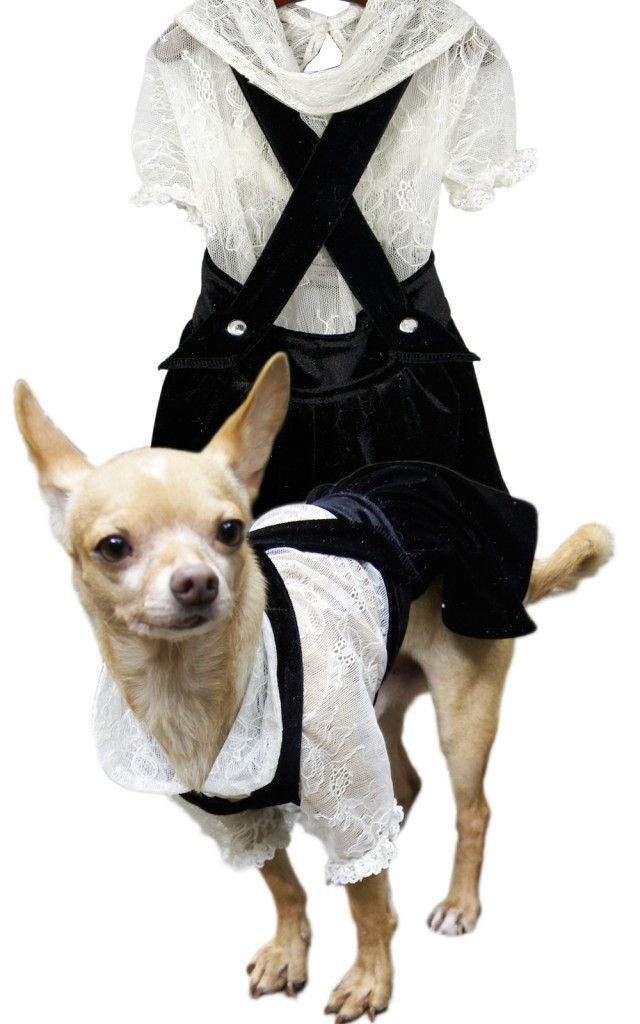 Image on PawVogue  - Lola Canine Couture