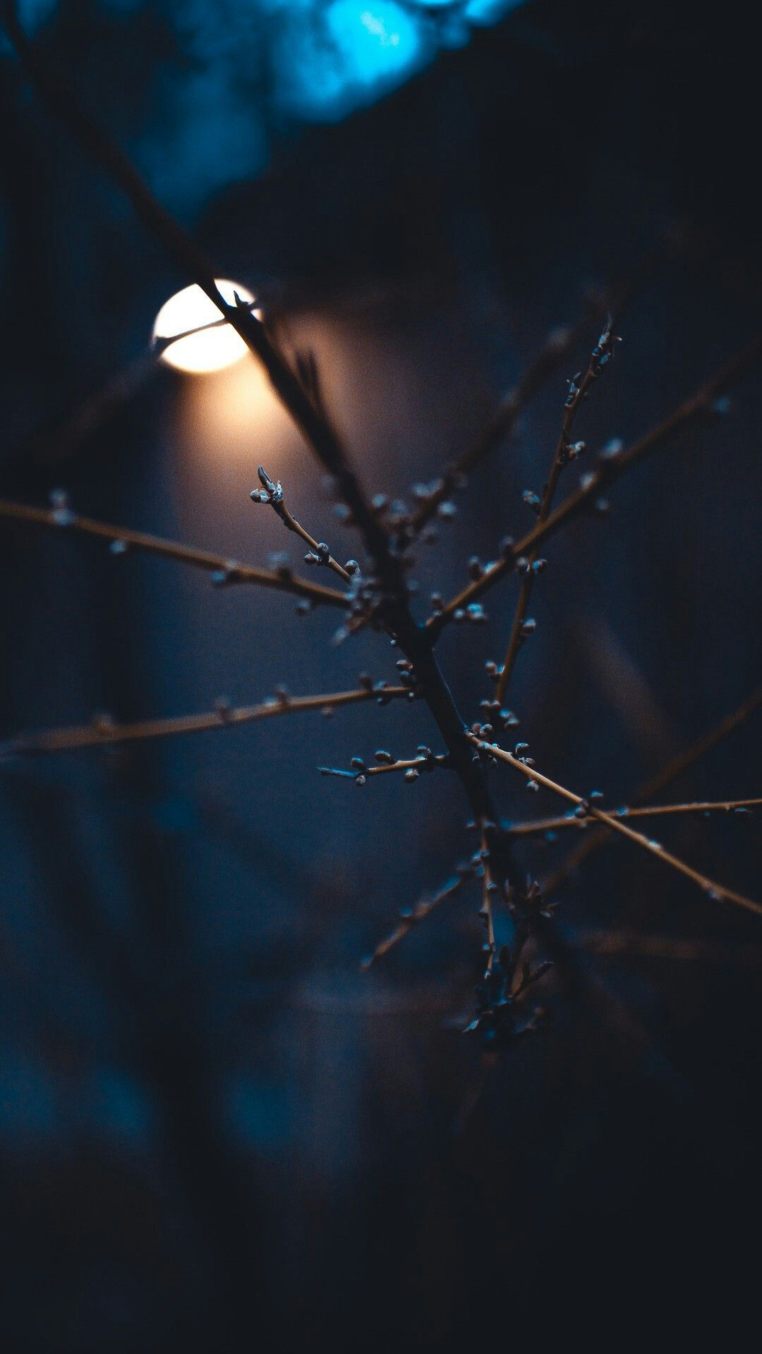 Branches Nature Aesthetic Nature Photography Wallpaper Backgrounds