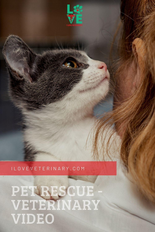 Veterinary Video Pet Rescue In 2020 Animal Rescue Pets Rescue