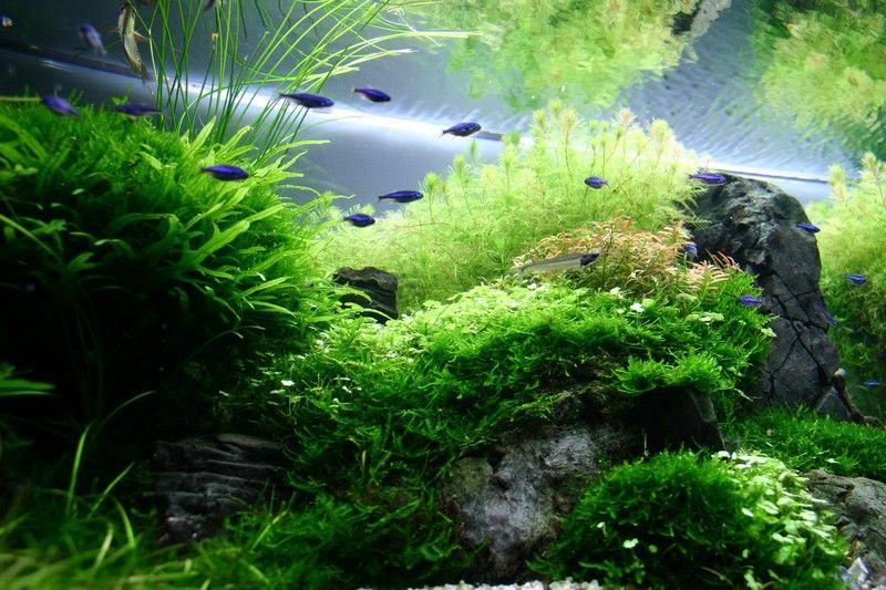 Layout by mel tank pinterest aquarium bocal et bassin for Aquarium bocal