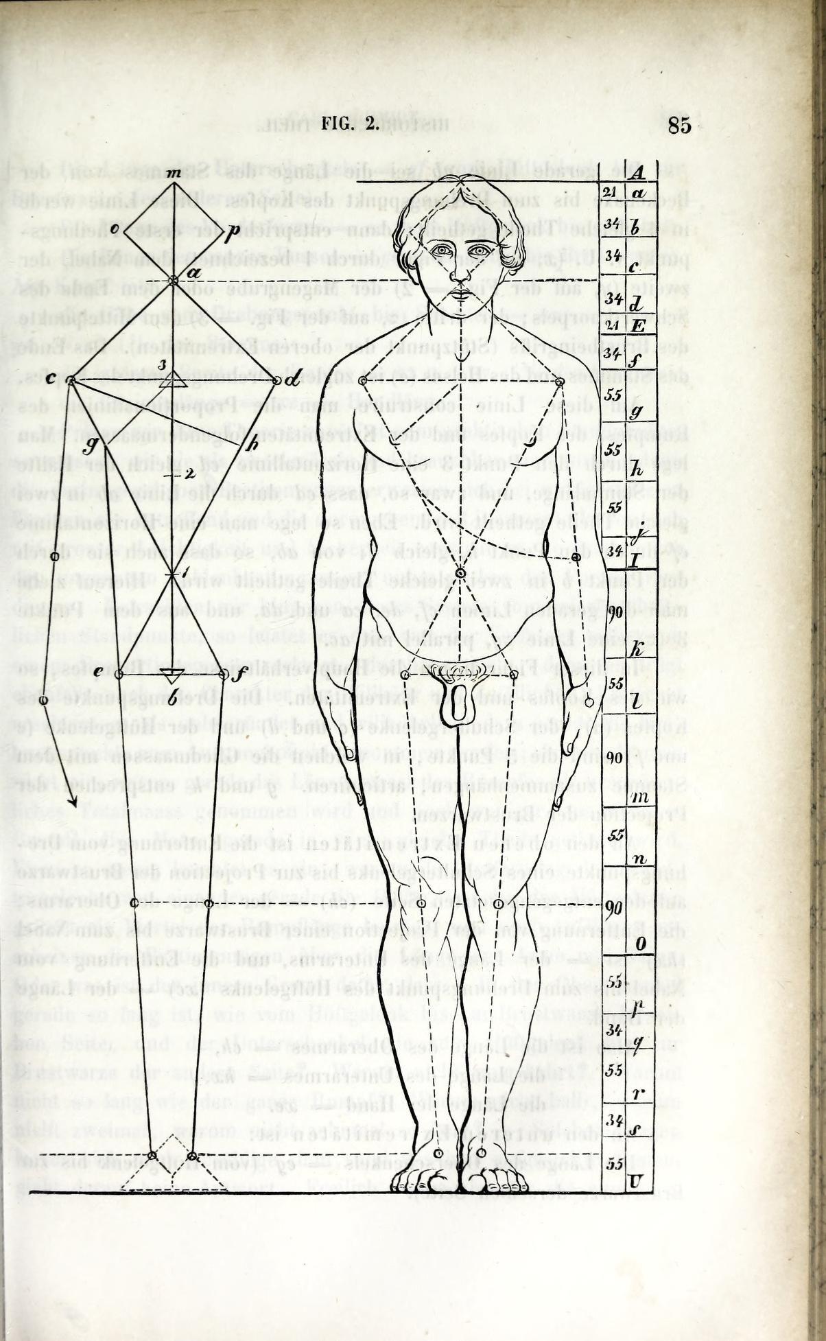 Fein Lehre Der Menschlichen Anatomie Ideen - Anatomie Ideen ...