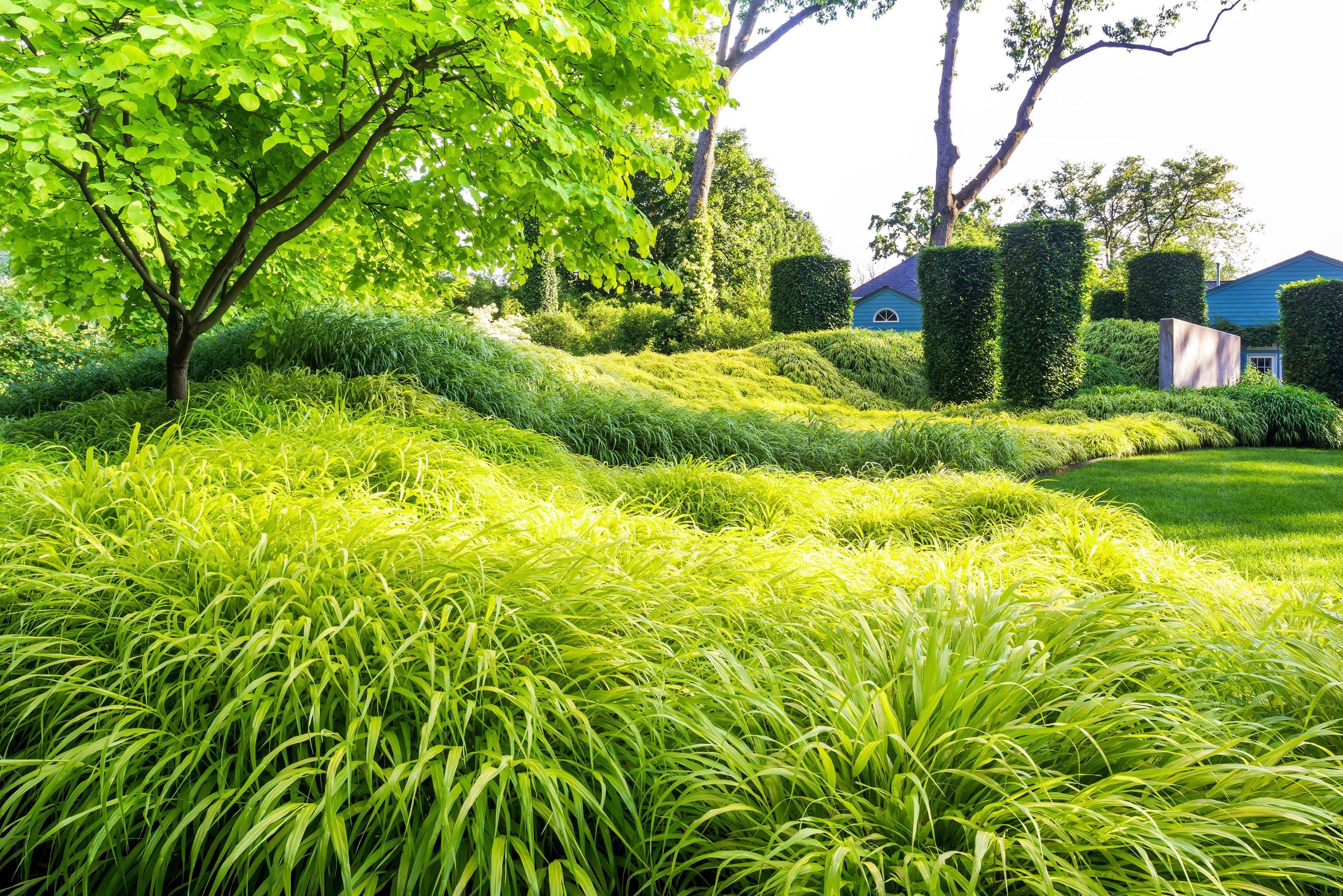 Das Japan-Zwergschilf (http://galasearch.de/plants/12734-hakonechloa-macra) ist immer eine sichere Bank, wenn es um gediegen-elegante Flächenbegrünung geht. Man beachte hier die Strukturierung der Fläche durch Schattenwurf infolge sanfter Bodenmodulation.