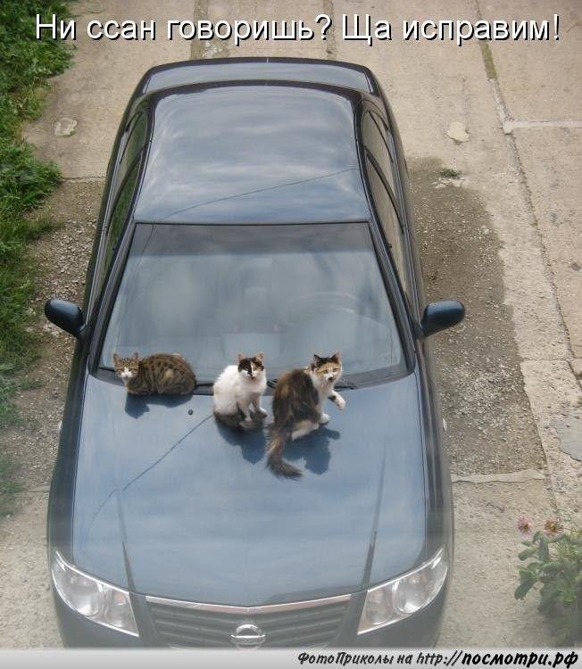 Смешные картинки про котов!   Кошки, Кот, Смешные кошки