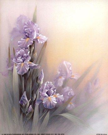 T C Chiu Violet Iris Belles Images De Fleurs Peinture Fleurs