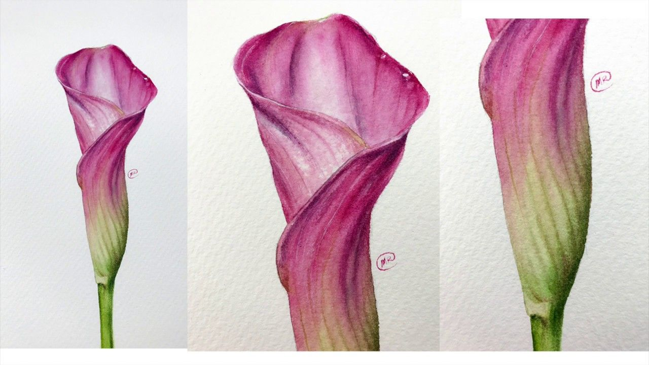 Watercolor Calla Lily Flower Painting Demo Youtube Bible Verses