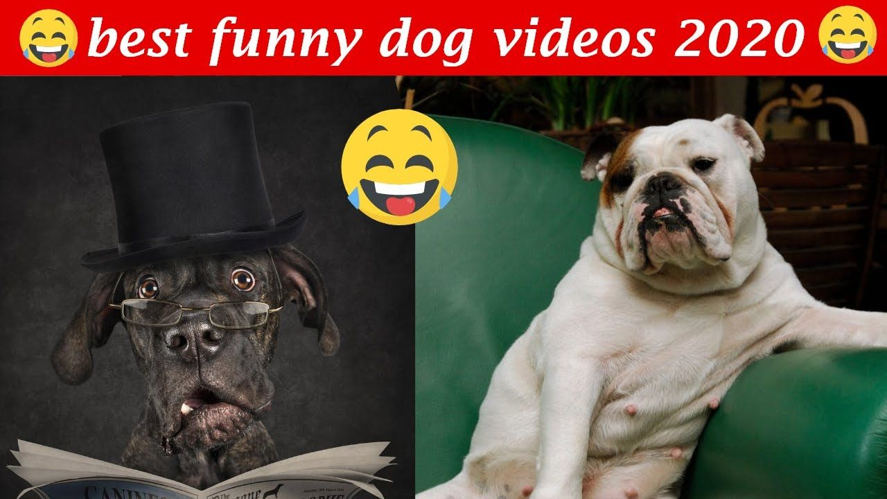 Dogs Doing Funny Things Tik Tok Cutest Puppies Tiktok Compilation Dogs Doing Funny Things Cute Puppies Funny Animal Videos