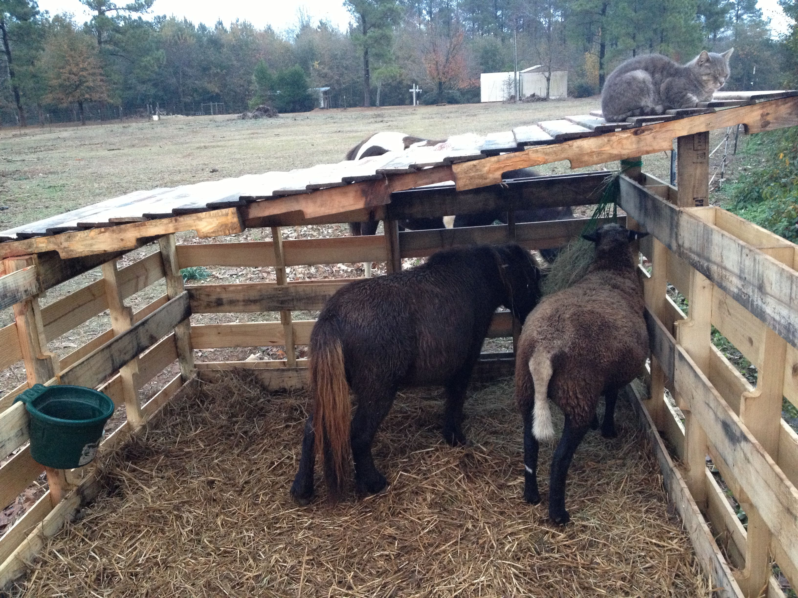 Horse Shelters, Sheep Shelters, Miniature Horses, Mini Horses, Diy ...