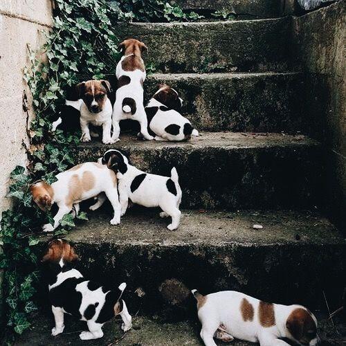 Wonderful Dogo Chubby Adorable Dog - 9582ba9f7a675a09b56c5327241dd83e  Collection_319068  .jpg