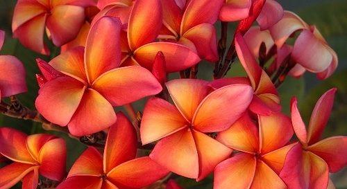 Pin On Interesting Plants