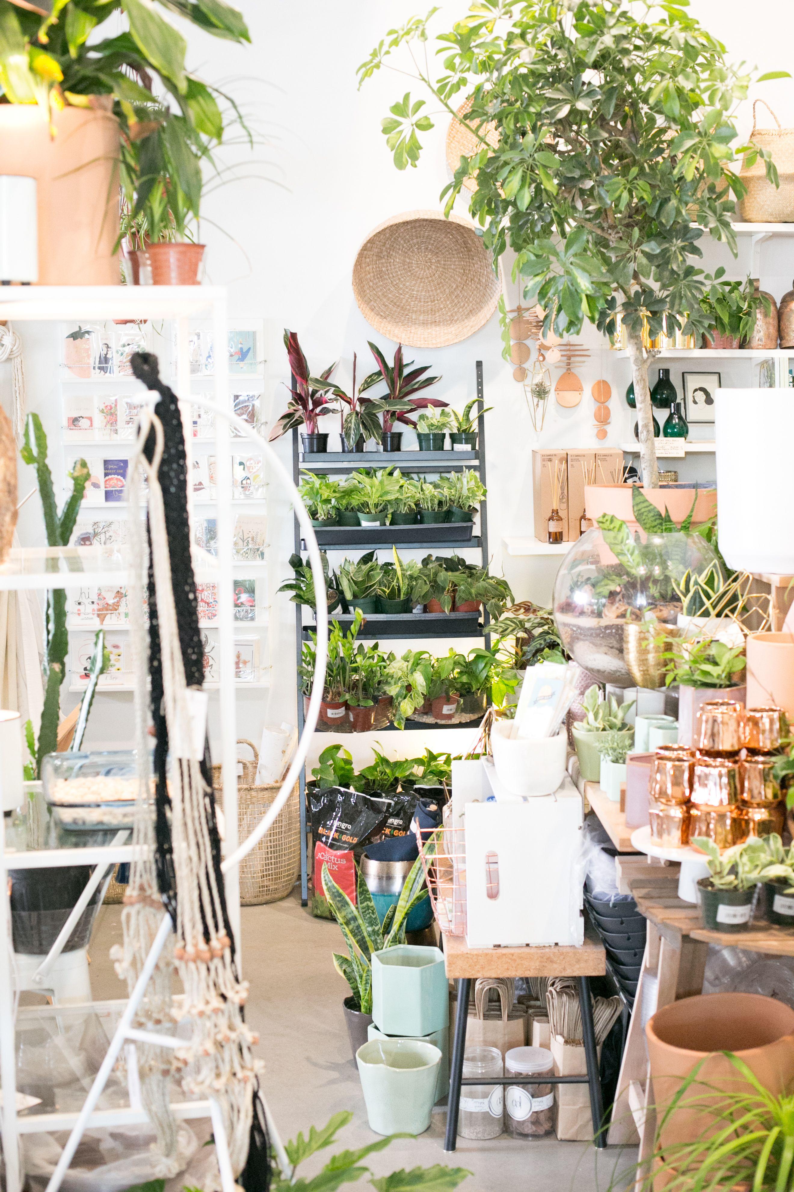 The Zen Succulent Plant Shop In Raleigh Modern Terrarium