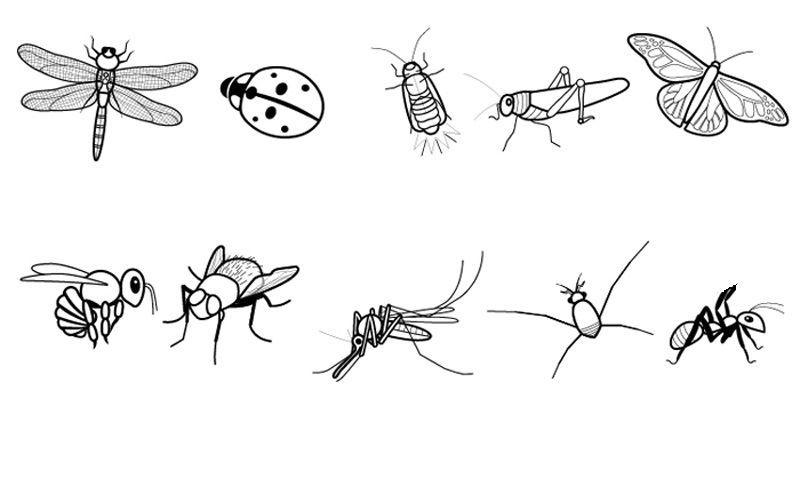 Insectos Dibujo Para Colorear E Imprimir Insectos Animados Insectos Imagenes De Insectos