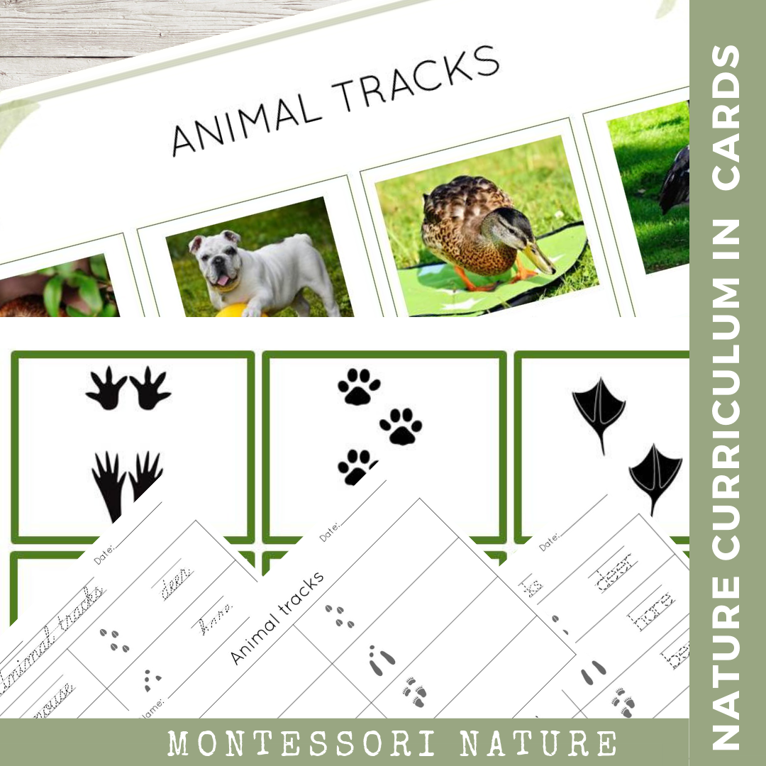 Animal Tracks Printable Nature Curriculum In Cards Animal Tracks Animal Learning Montessori Activities [ 1080 x 1080 Pixel ]