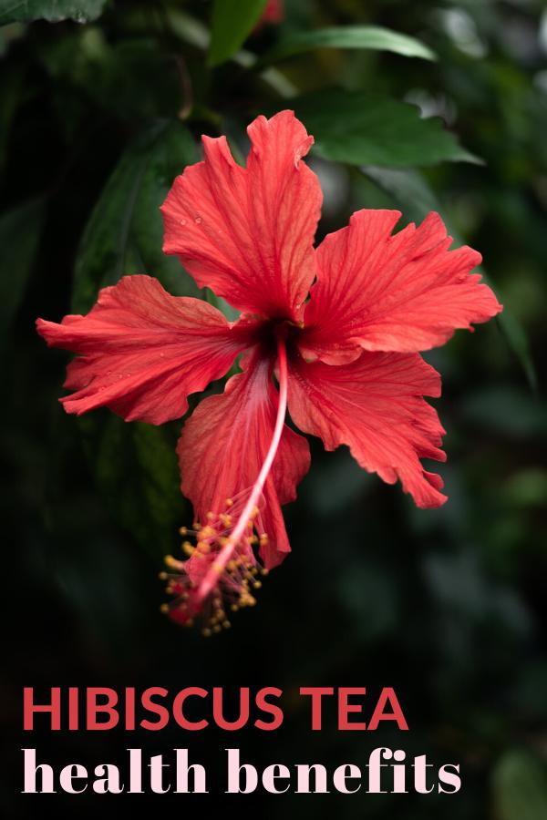 Photo of Hibiscus Herbal Tea Health Benefits