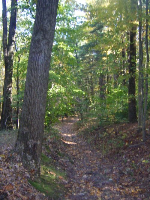 A great place close by to get out with a friend and go for a hike!  Be sure to wear proper foot gear!   Nolde State Forest, Shillington, PA ...TARA