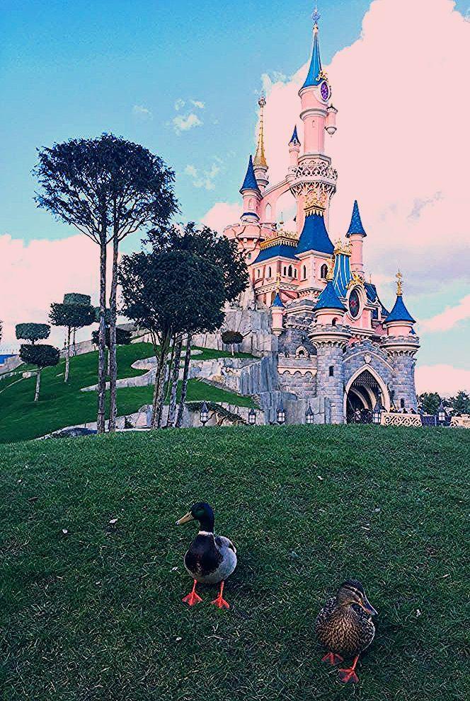 Photo of Disneyland Paris Mickey Disneyland