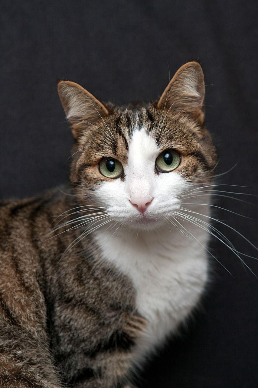 CAT Intalnire site- ul web